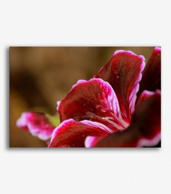 Flor roja  _G.129